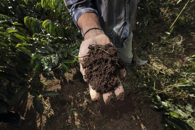 THE TIME TO REGENERATE COFFEE IS NOW, AND IT STARTS WITH HEALTHY SOIL