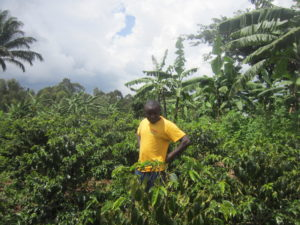 Uganda Plots Major Coffee Sector Growth