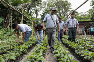 Coffee Farmers Face Increasing Pressure to Migrate
