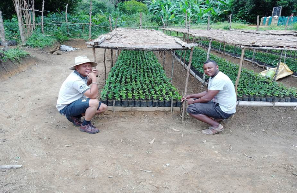 Agroforestry and coffee in Madagascar