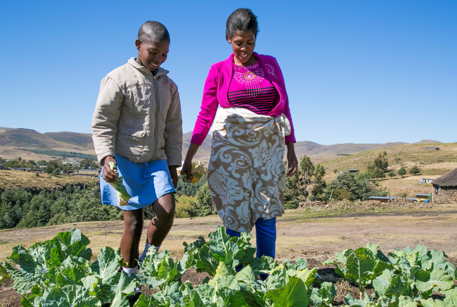 Market Monitoring across the Humanitarian-Development Nexus: Linking the COVID Market & Supply Chain Monitoring Experience in Lesotho to Livelihoods Programming